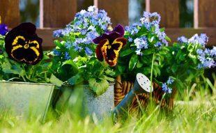 ültetés, egynyári virág, kétnyári virág