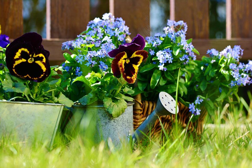 Indul az egy- és kétnyári virágok szezonja!