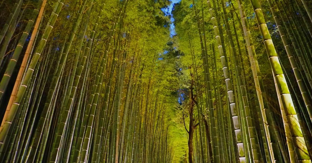 Nem e világi bambuszerdő
