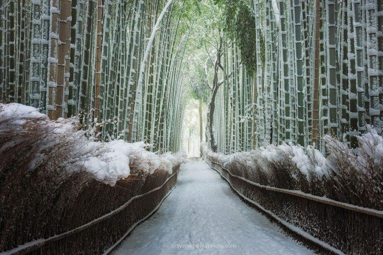 bambuszerdo