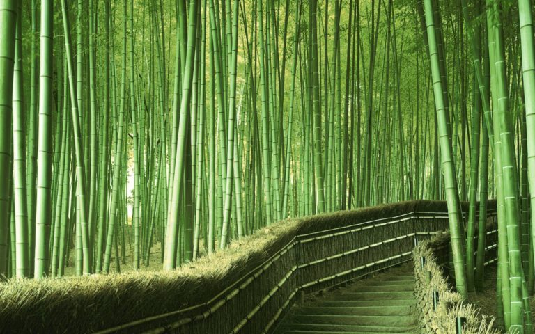bamboo forset 3
