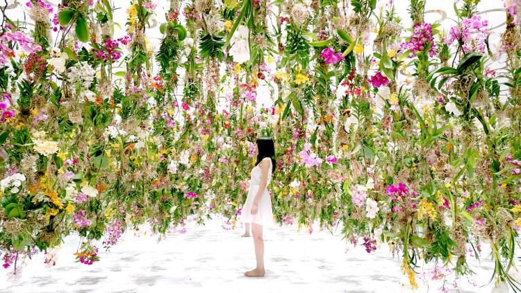 Ilyen orchidea függő kertet még biztosan nem láthattál