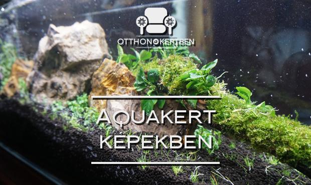 Egy aquakert születése képekben
