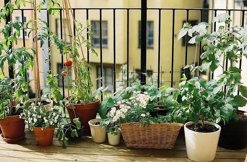 erkély balkonláda