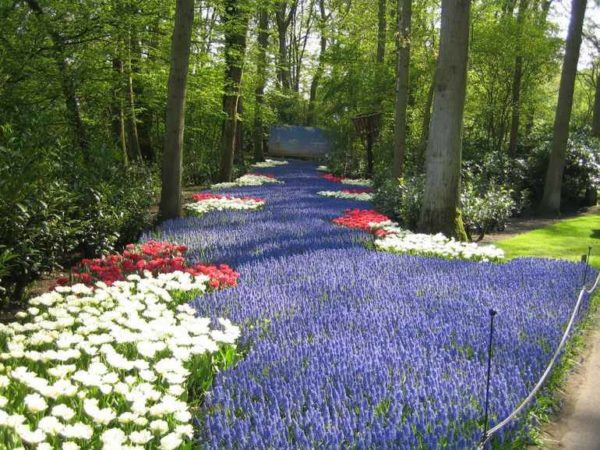 keukenhof-gardens-netherlands-photo_995860-770tall