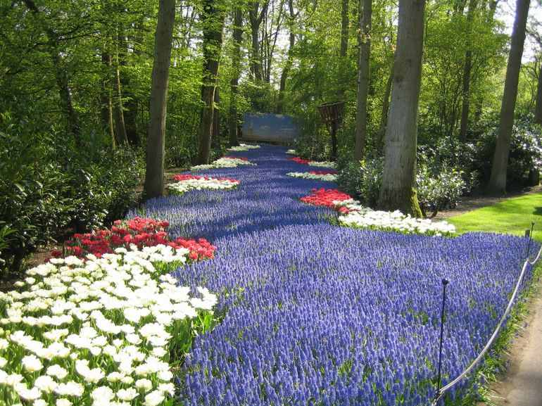 keukenhof-gardens-netherlands-photo_995860-770tall