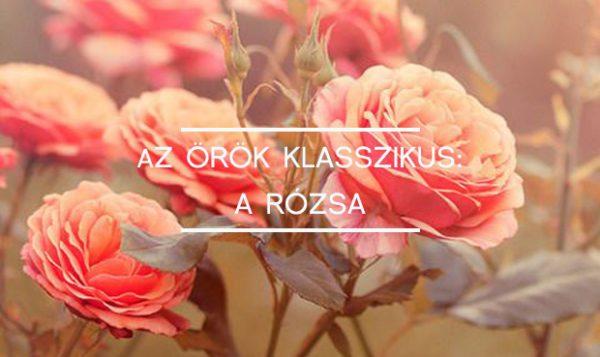 kiemelt rózsa