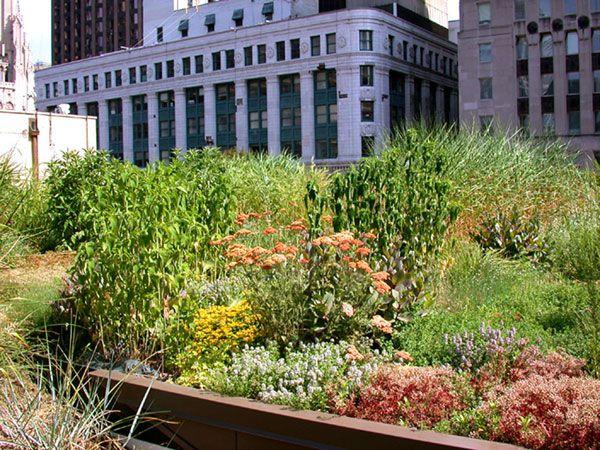 zöld tető a chicagói városházán