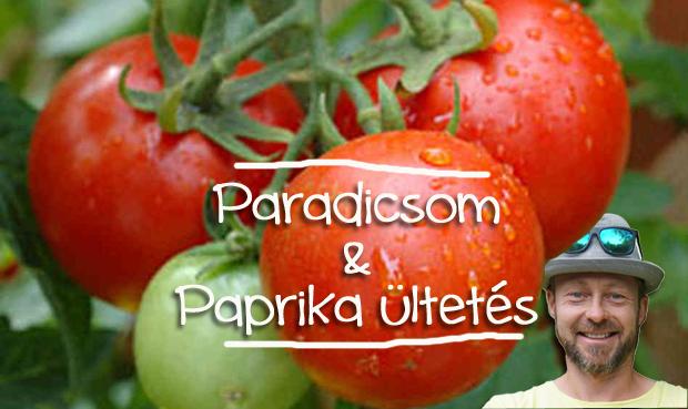PRAKTIKÁK PARADICSOM & PAPRIKA ÜLTETÉSÉHEZ - VIDEÓ MÁRKKAL