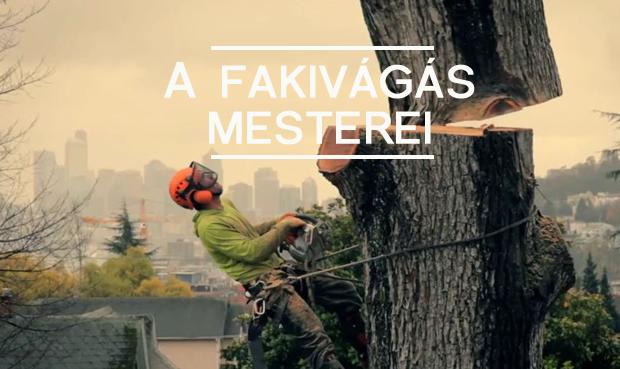 favagas_kk