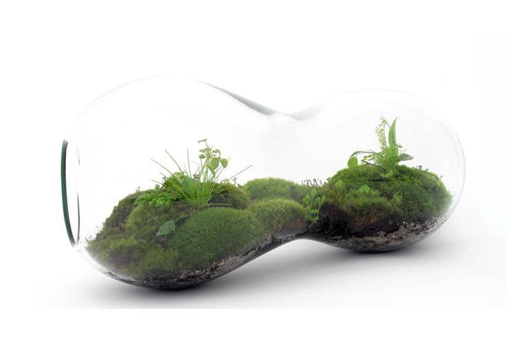 Üvegbe zárt világ avagy milyen a modern terrarium?