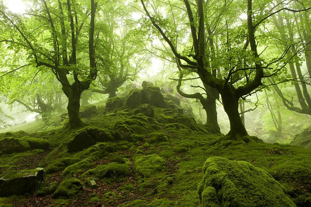 Lenyűgöző fotókon egy titokzatos baszk erdő
