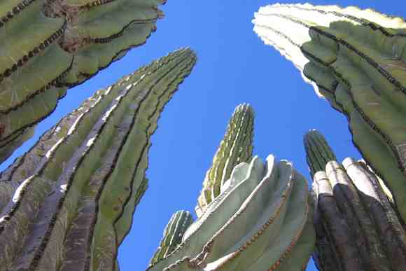 kaktusz2-kicsi