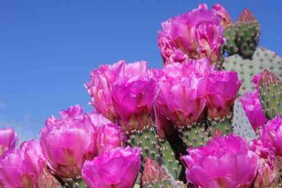 kaktusz_kicsi