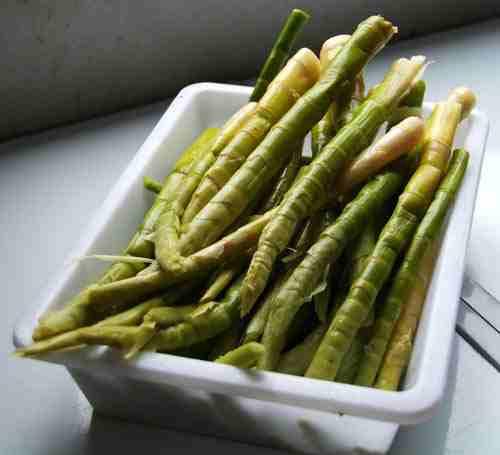 friss bambusz