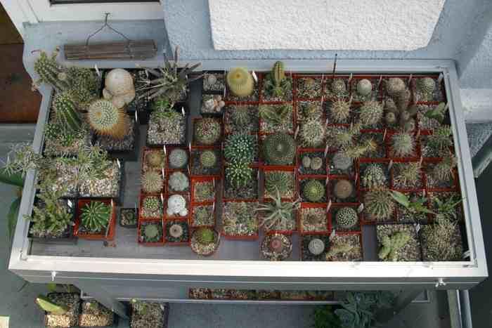 kaktuszok teleltetése