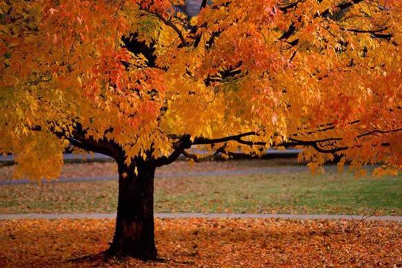 őszi kerti nagytakarítás