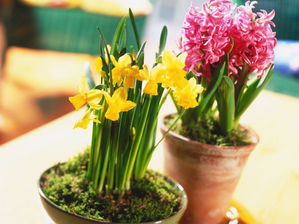 tavaszi-hagymasok-teli-hajtatasa