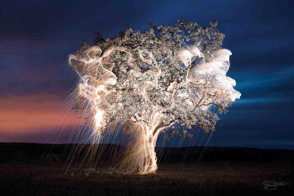 Fák fényzuhatagban