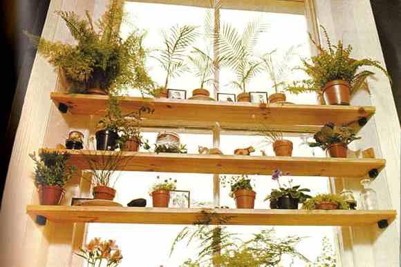 szobanövények őszi beköltöztetése