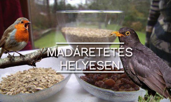 madaretetes