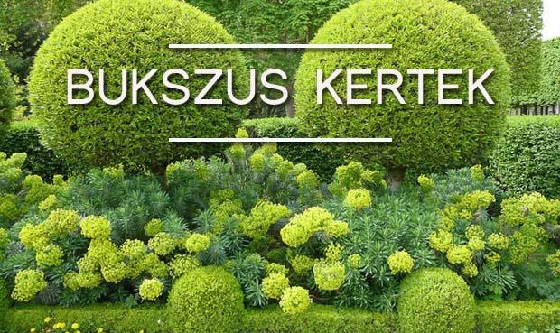bukszus kert
