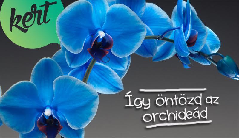 Így öntözd az orchideád - videó Márkkal