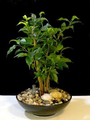 hidrokulturas-noveny