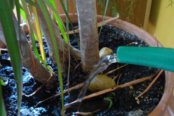 növényeink vízigénye