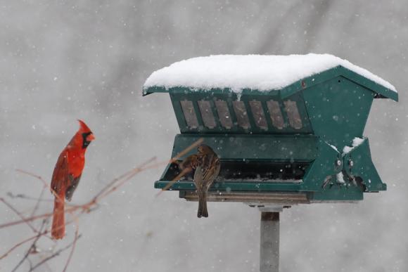 madáretetés a januári kertben