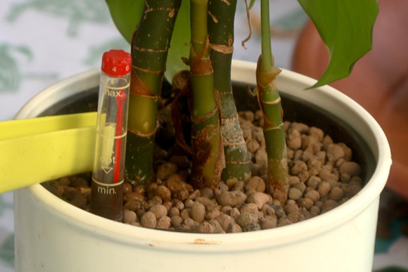 hidrokulturas-novenytartas