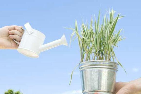 szobanövény locsolás, öntözés
