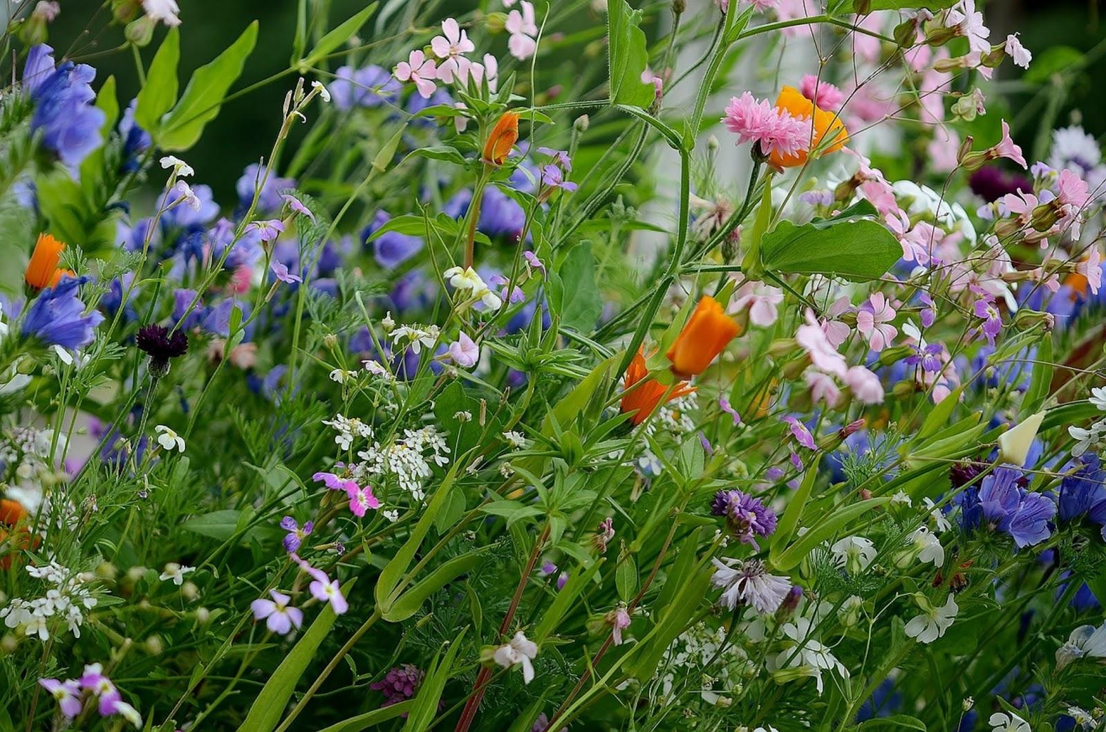 Vissza a természethez - csináljunk vadvirágos rétet!