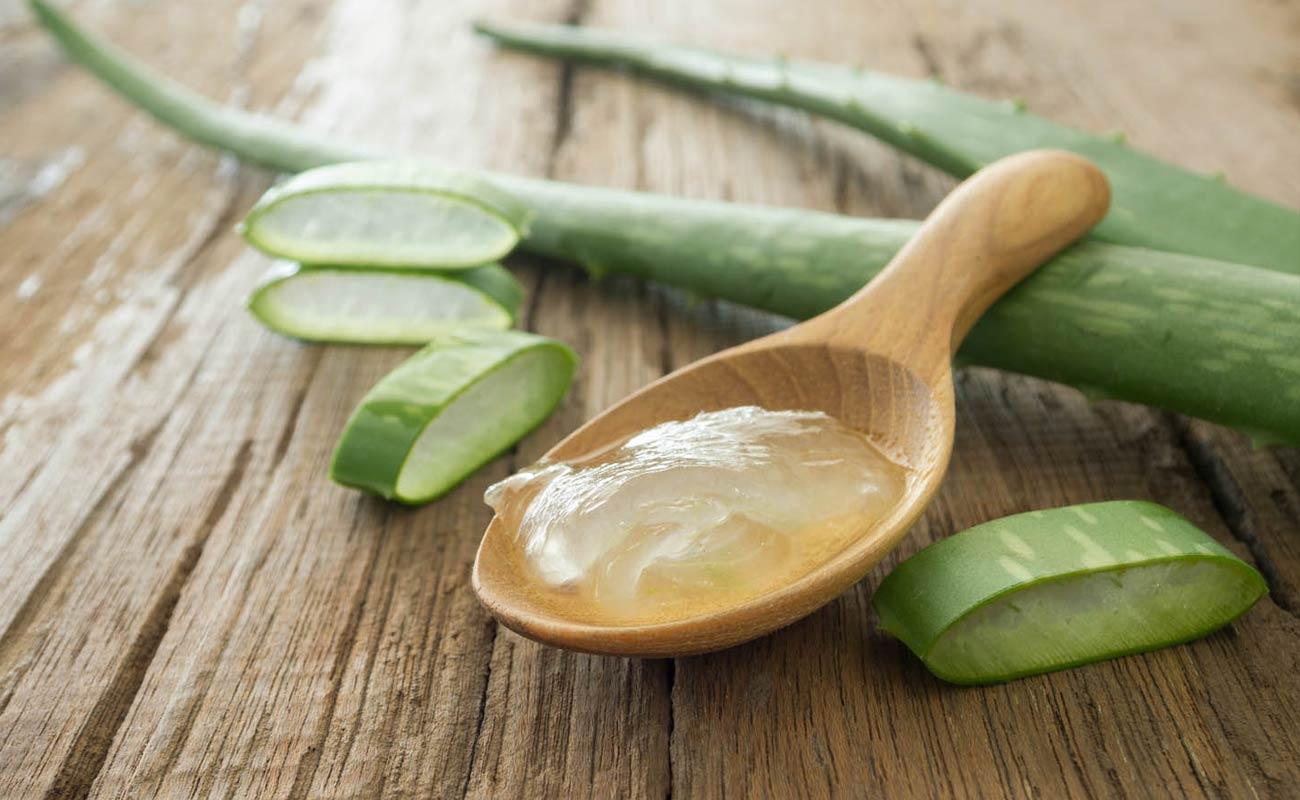 Korunk gyógynövényei 3. - Aloe vera