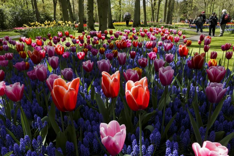 keukenhof, virágpark, tulipán, hollandia