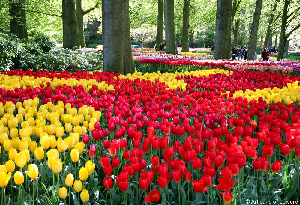Keukenhof, Hollandia, tulipán, virágpark