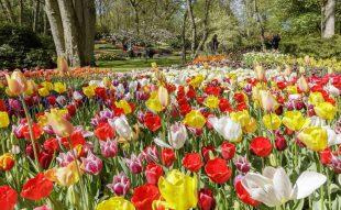 Hollandia, tulipán, virágpark, Keukenhof