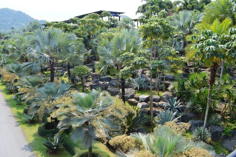 Nong Nooch Tropical Botanical Garden Pálmák