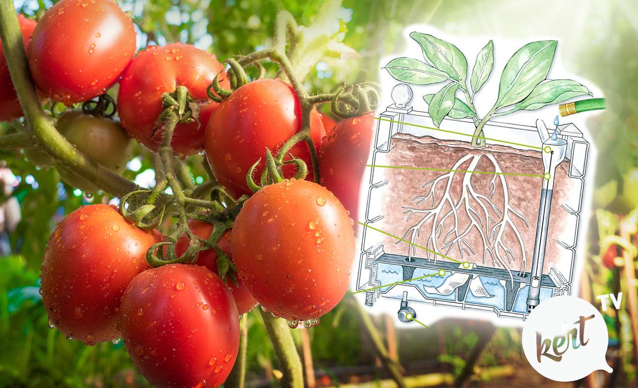 Így készíts víztározós cserepet, ami akár két hétig is ellátja a növényeid vízzel
