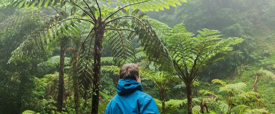 külföldri növények szaporítása