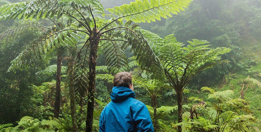 Hasznos tudnivalók a nyaralásból hazahozott növények szaporításához