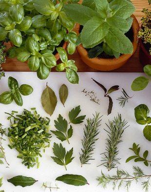 fűszernövények fagyasztása, szárítása