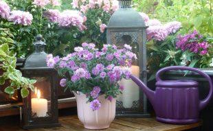 őszi balkonláda növények