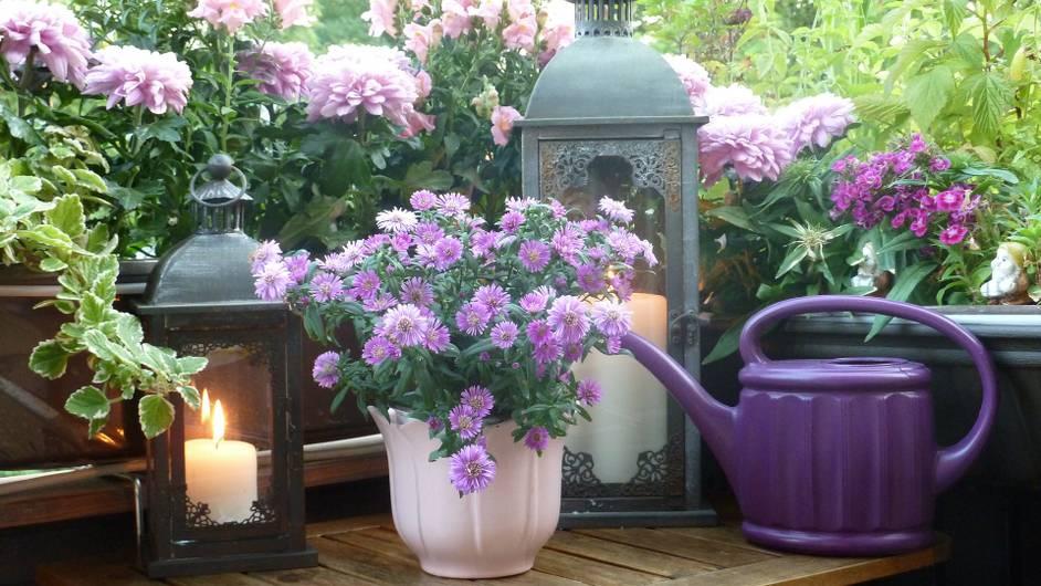 6 színes, szagos növény a mutatós őszi balkonládába