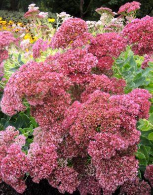 legszebb őszi virág