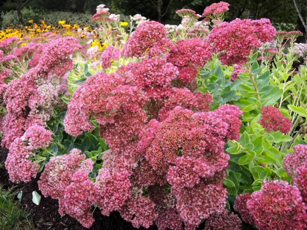 Az őszi kert 7 legszebb virága