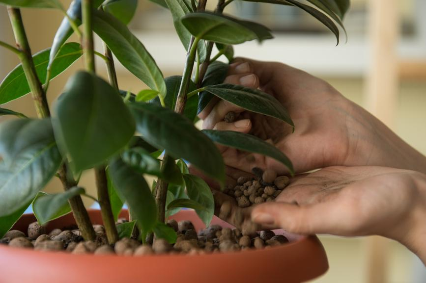 Hizlaljuk fel télen virágzó szobanövényeinket!