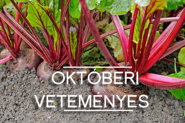 oktoberi-vetemenyes