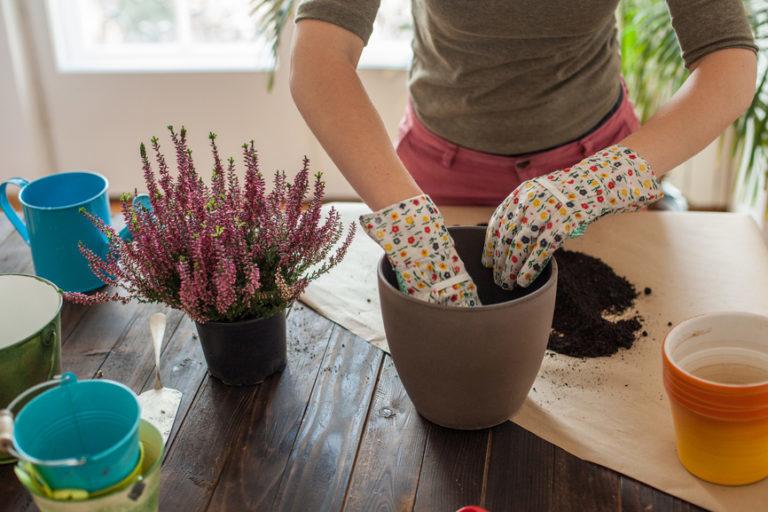 A 12 leggyakoribb növénygondozási hiba