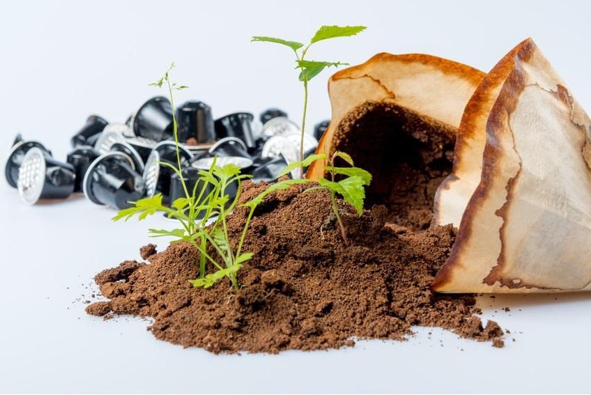 8 jól bevált házi praktika a szép szobanövényekért